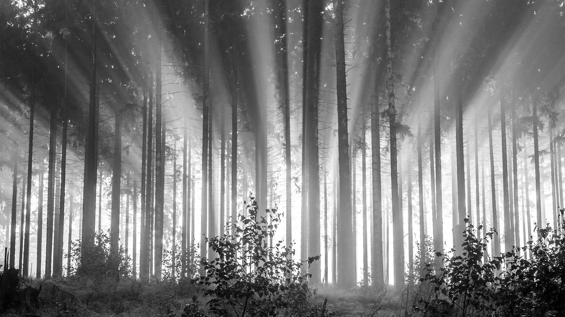 Bäume-min