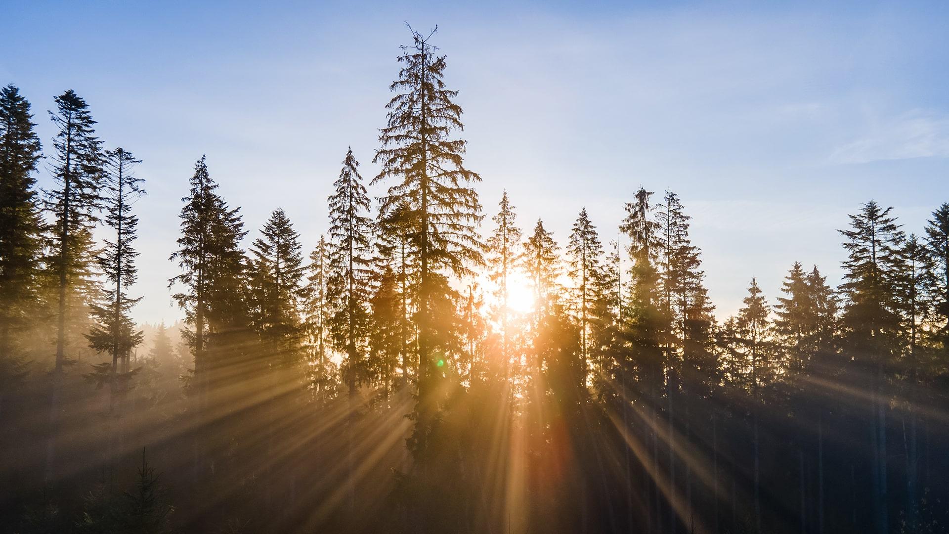 Waldstimmung-min