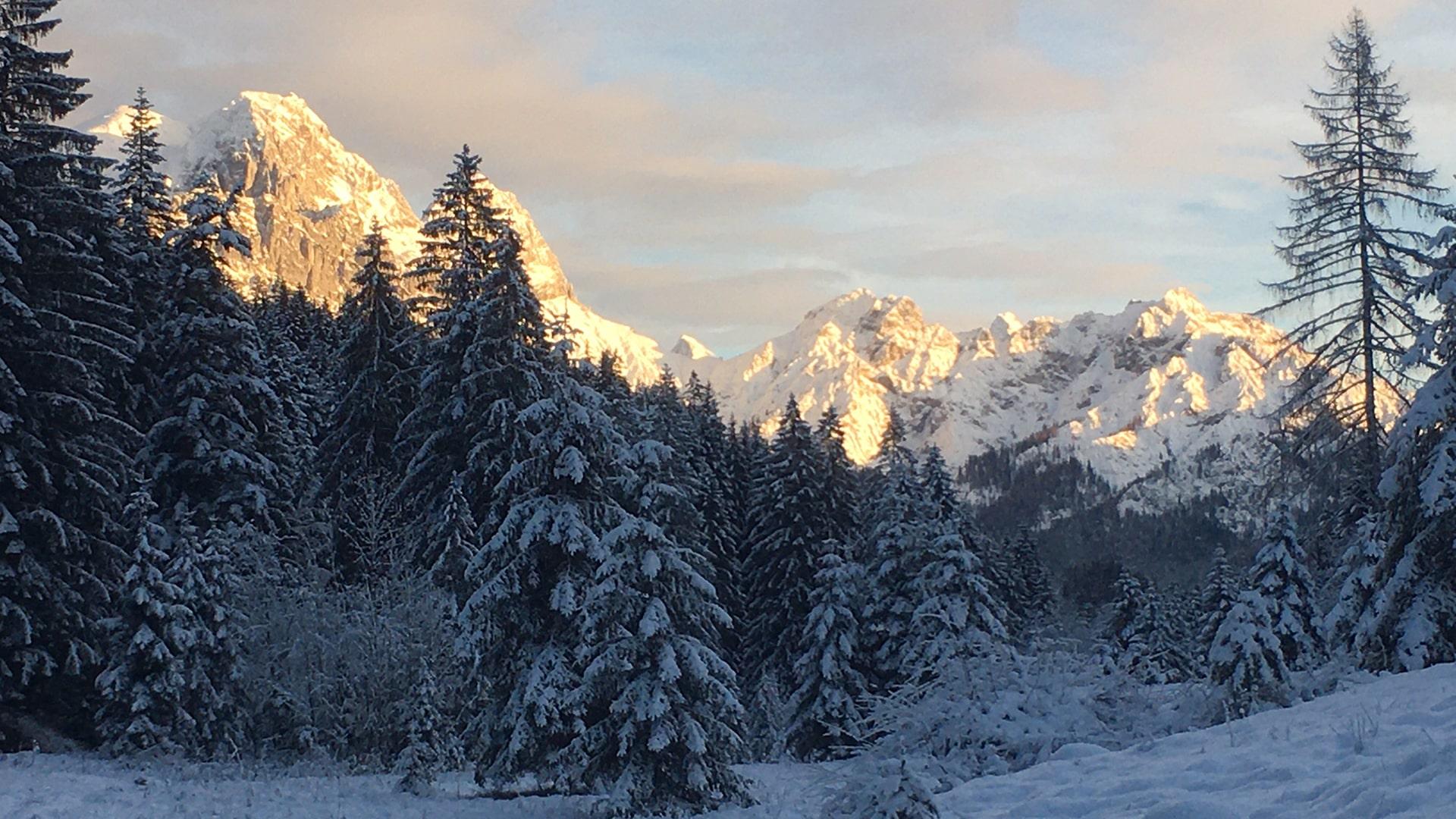 Winterwald mit Häuselhorn-min